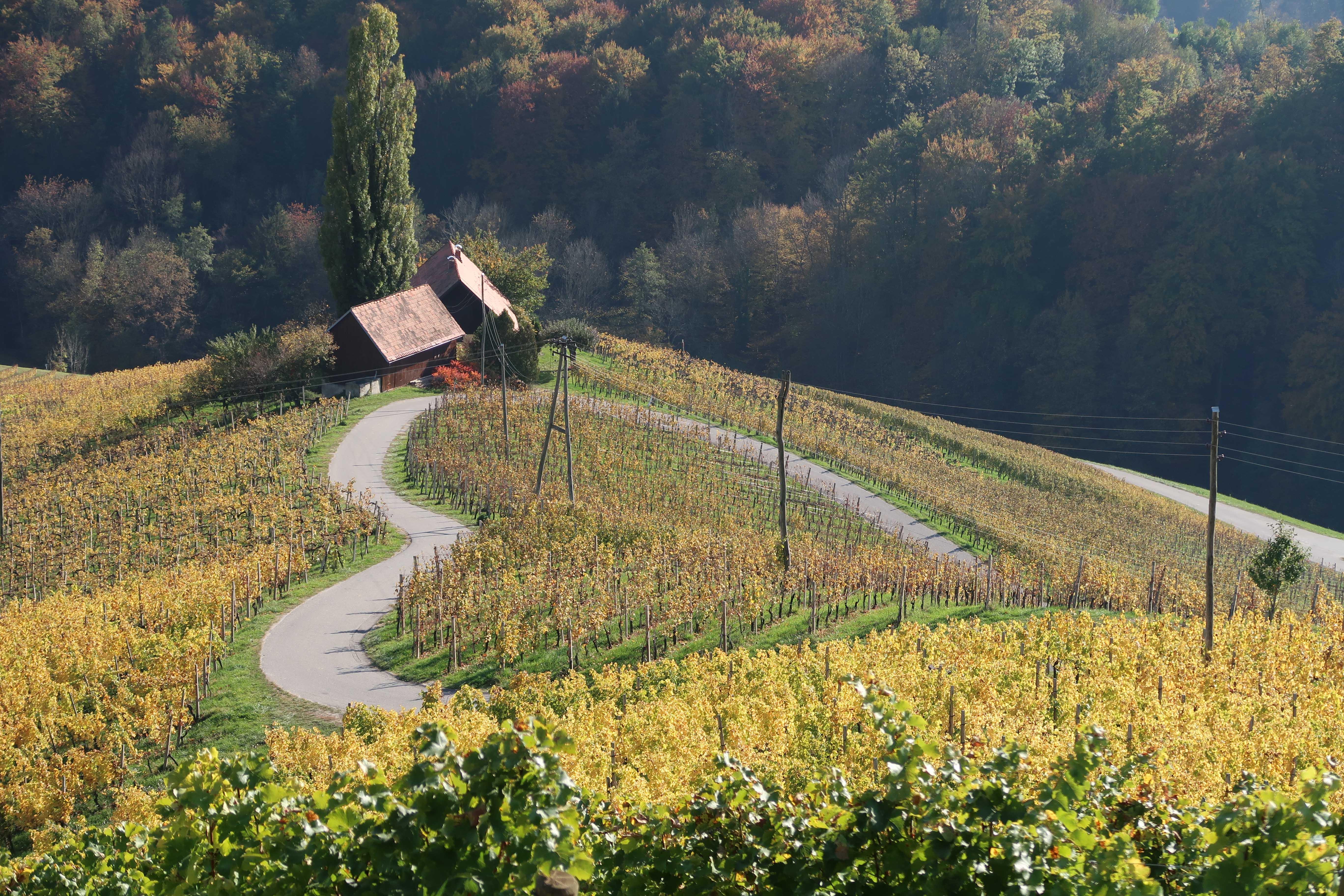 heart shape road, slovenia, wine